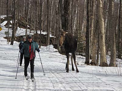 skiers with moose